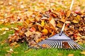 free leaf collection